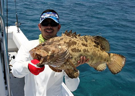 grouper catch fishing howtocatchanyfish reef barrier tips enlarge below pic fish