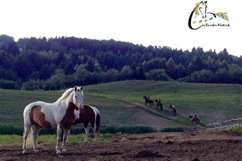 pension exterieur pour chevaux pension pour chevaux au naturel pension petites annonces 233 questres