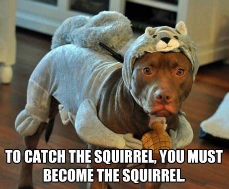 Funny Pitbull Memes - funny pitbull meme funniest pictures