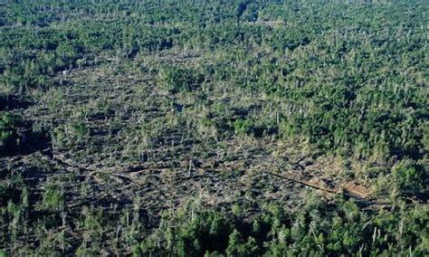 Descubren tala de 600 héctareas de bosque nativo en