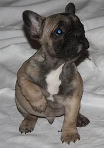 Hundebekleidung Französische Bulldogge : tieranzeigen extraklasse kleinanzeigen ~ Frokenaadalensverden.com Haus und Dekorationen