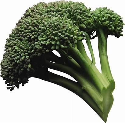 Pngimg Broccoli