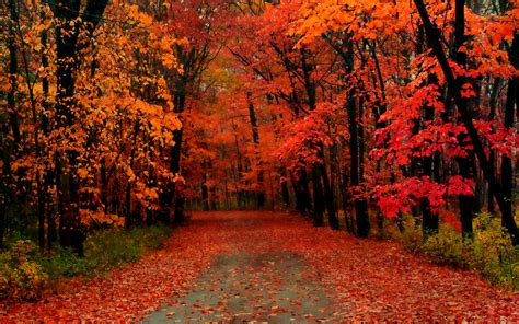 fall trees beautiful autumn wallpapers