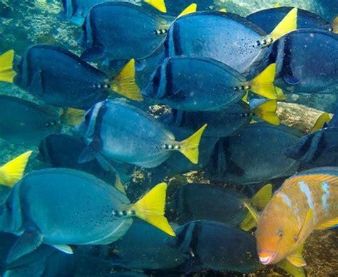 fish  galapagos
