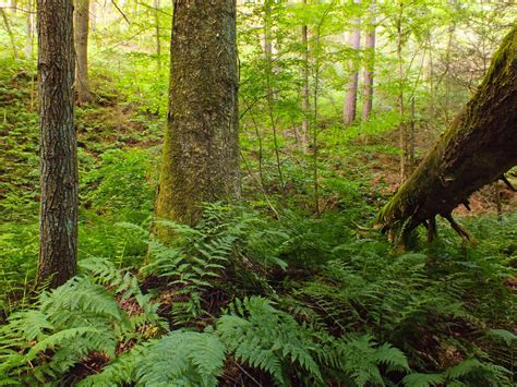 picture wood fern leaf tree wilderness nature
