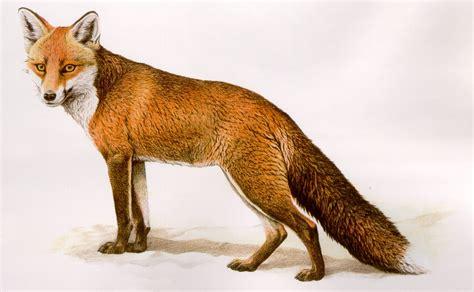 fauna mammiferi