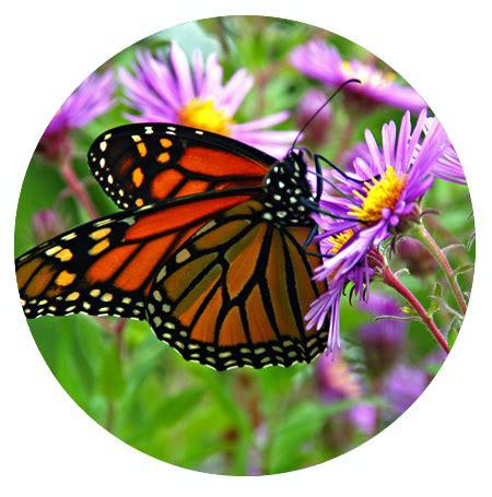 butterfly sensory garden sight garden   senses