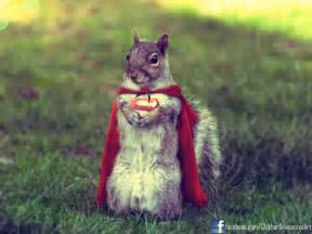 Squirrel Dressed as Thor