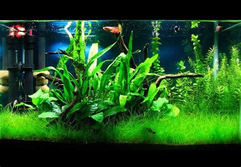 aquascaping tips 4 tips for arranging plants in a freshwater aquarium