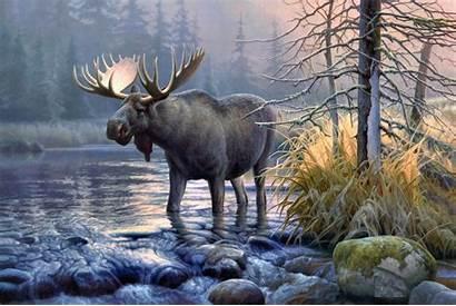 Wildlife Desktop Backgrounds Wallpapers Moose