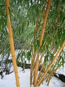 Bambus Im Winter : bambus winterschutz gr ser im k bel berwintern ~ Frokenaadalensverden.com Haus und Dekorationen