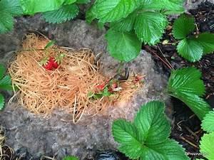 Asche Gut Für Pflanzen : blog willkommen beim provinzecho ~ Markanthonyermac.com Haus und Dekorationen