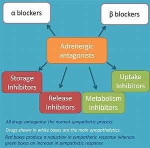 Adrenergic antagonists -Introduction
