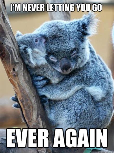 Angry Koala Meme - angry koala meme