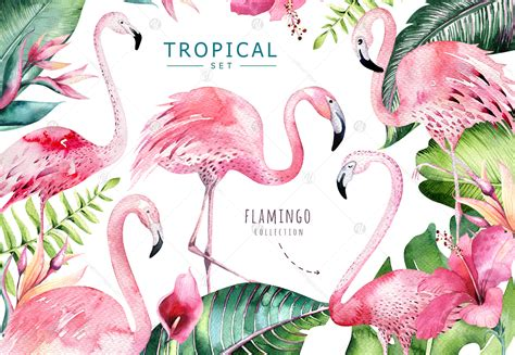 tropical set ii flamingo collection  illustrations