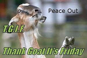 T G I F  Thank Goat It U0026 39 S Friday