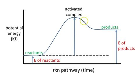 # 6 Potential Energy Diagram Endothermic Rxn Youtube