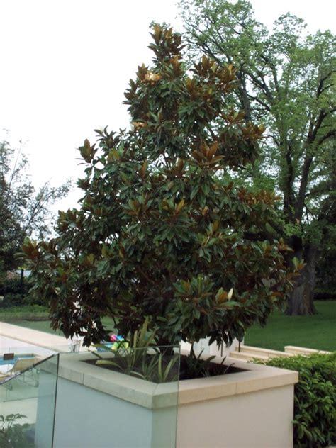arbornet quality advanced trees