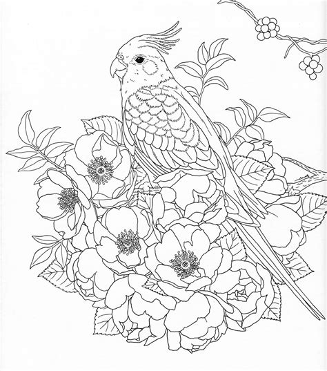 harmony  nature adult coloring book pg  color pages
