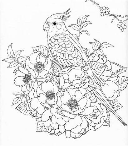 Coloring Adult Nature Books Pages Patterns Pg