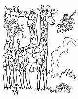 Giraffe Coloring Pages Eating sketch template