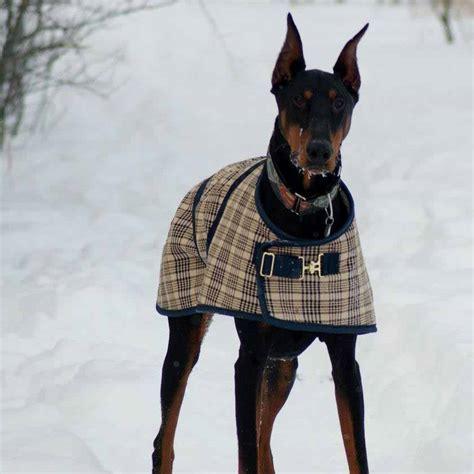 Foggy Mountain Navy Plaid Nylon Turnout Dog Coat
