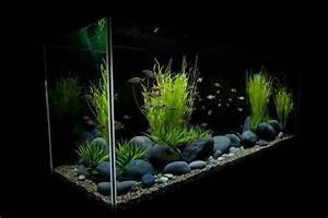 Aquarium Dekorieren Ideen : dekorieren sie das aquarium minimalistisch und schlicht mit gro en steinen aquascaping ~ Bigdaddyawards.com Haus und Dekorationen