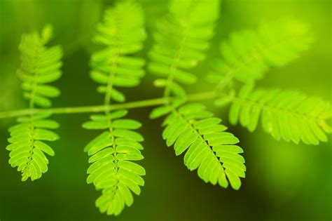 fresh green leaf  stock photo public domain pictures