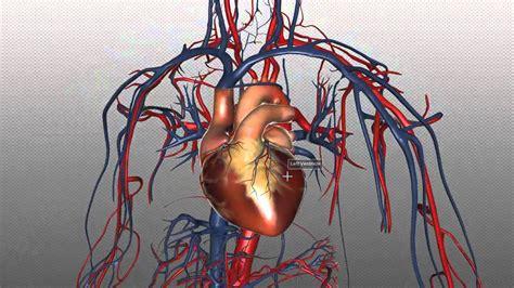 heart  major vessels part  anatomy tutorial