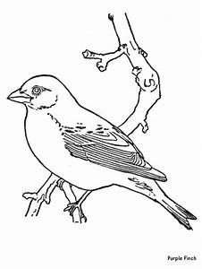 Birds Coloring Pages For Kids - Coloring Home