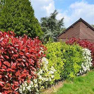 Blühende Pflanzen Winterhart : heckenpflanzen schnellwachsend pflegeleichte ~ Michelbontemps.com Haus und Dekorationen