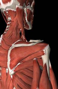 Why All Of Your Clients Need Rotator Cuff Training
