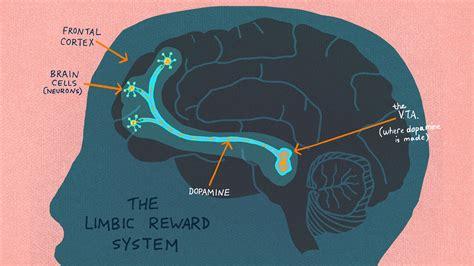 anatomy  addiction  heroin  opioids hijack