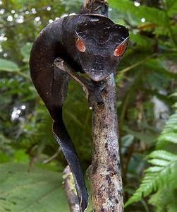 Rare Animals | Cool critters | Pinterest