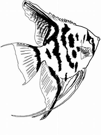Aquarium Fish Coloring Angelfish Printable Angel Drawing