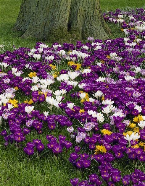 bulb flowers list bulb flowers list bing images