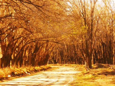 fondos de pantalla luz de sol paisaje bosque
