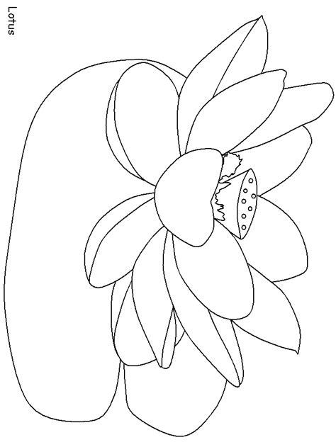 india lotus countries coloring pages coloring page book