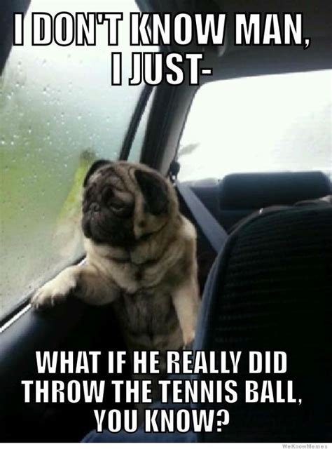 Sad Pug Meme - introspective pug know your meme