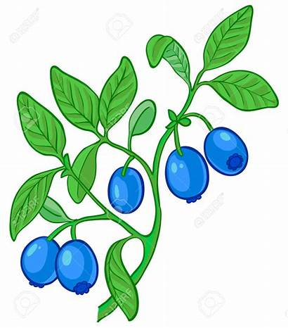 Blueberry Bush Clipart Berry Blueberries Wildberry Branch