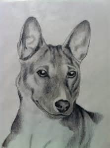 Basenji Dog Drawing