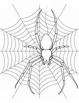 Spider Coloring Web Its Pages Printable Halloween Drawing Print Colouring Adult Spiders Supercoloring Template Pretty Categories sketch template