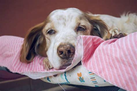 arthose beim hund  kannst du deinem hund helfen