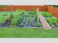 Chef's Vegetable Garden Update YouTube
