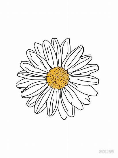 Daisy Flower Sticker Drawing Margarita Stickers Vsco