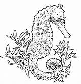 Coloring Seahorse Pages Realistic sketch template
