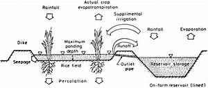 Schematic Diagram Of Water Balance Parameters In Rice  U00aeeld And On