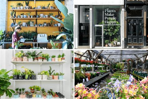 Garten Pflanzen Shop by Garden Center Top 10 Plant Stores In Nyc