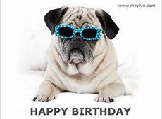 Tierische Geburtstagsbilder kostenlos online teilen