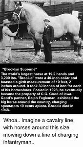 Brooklyn Supreme the World's Largest Horse at 192 Hands ...